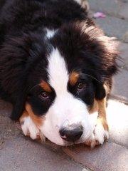 De beste puppy training krijgt u natuurlijk bij 123 Tinki